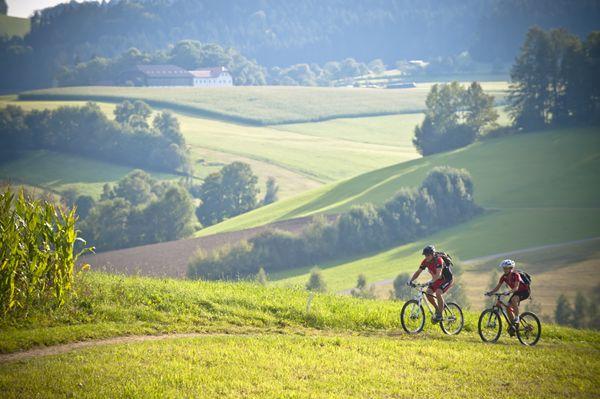 Mit dem #Mountainbike durch das #Mühlviertel und den #Weitblick genießen. Weitere Informationen zu #Mountainbikeurlaub im Mühlviertel in #Österreich unter www.muehlviertel.at/mountainbike - ©Oberösterreich Tourismus/Erber