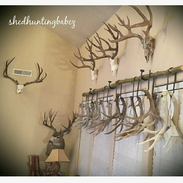 Antlers | deer antlers| shed hunting | hanging antlers| decorating with antlers www.shedhuntingbabez.com