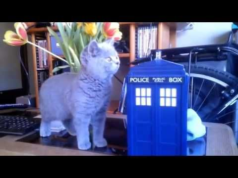 Ursus the British Shorthair is introduced to the TARDIS awwww