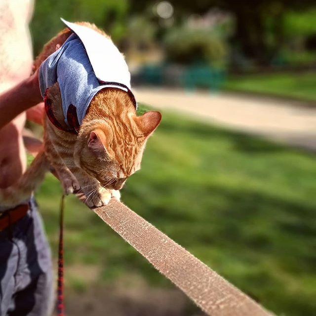 Heute Probieren Wir Mal Die Slackline Aus Katze Slackline