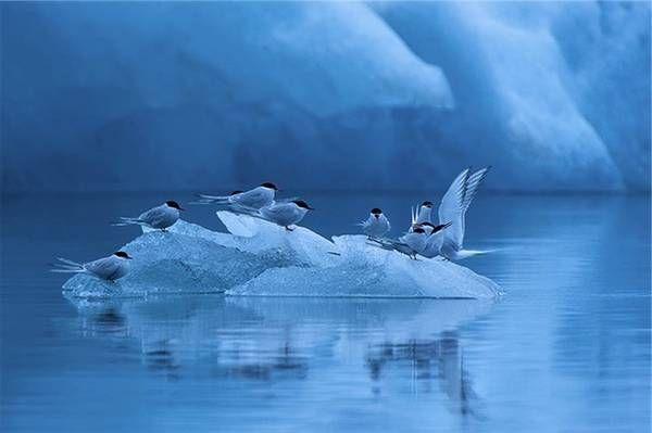 Dalla Germania le più belle foto naturalistiche - Galleria Fotografica - Ambiente - ANSA.it