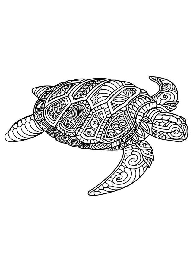 Sea Turtle Coloring Page For Adults Youngandtae Com In 2020 Turtle Coloring Pages Horse Coloring Pages Animal Coloring Pages