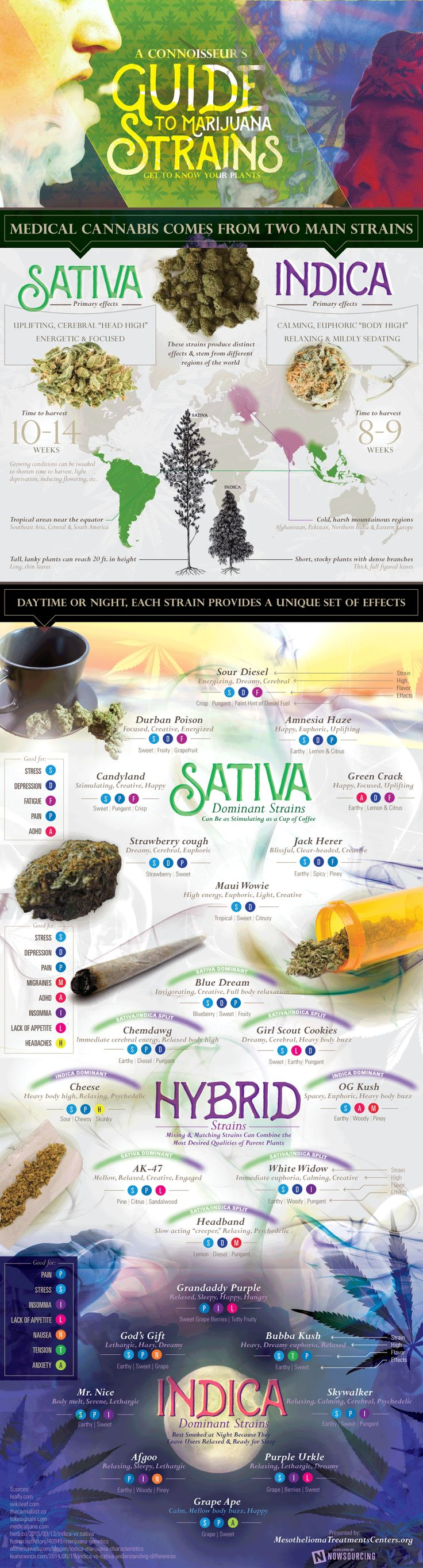 Get To Know Marijuana Plants Better - Infographic http://stores.ebay.com/nutritionalwellnessstore