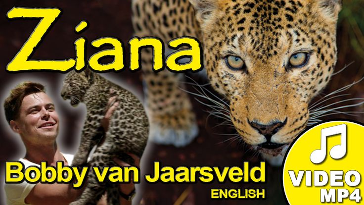 BUY the song now - Ziana! Written by Machiel Roets, dedicated to Ziana, a female leopard on Shayamanzi, and sung by Bobby van Jaarsveld #music #leopardtv #shayamanzi