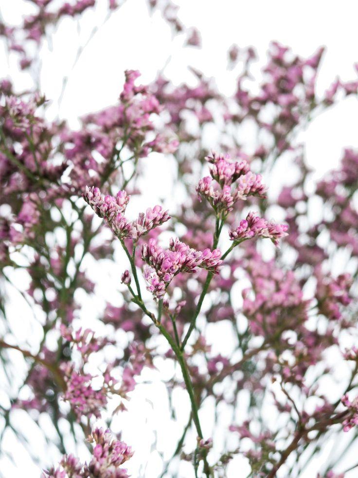 17 besten Sommerblumen Bilder auf Pinterest  Sommerblumen
