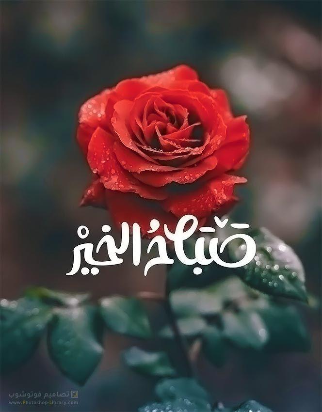 بطاقات صباح الخير صوره صباح الخير صباح الخير تويتر فيس بوك 2020 Flowers Plants Rose