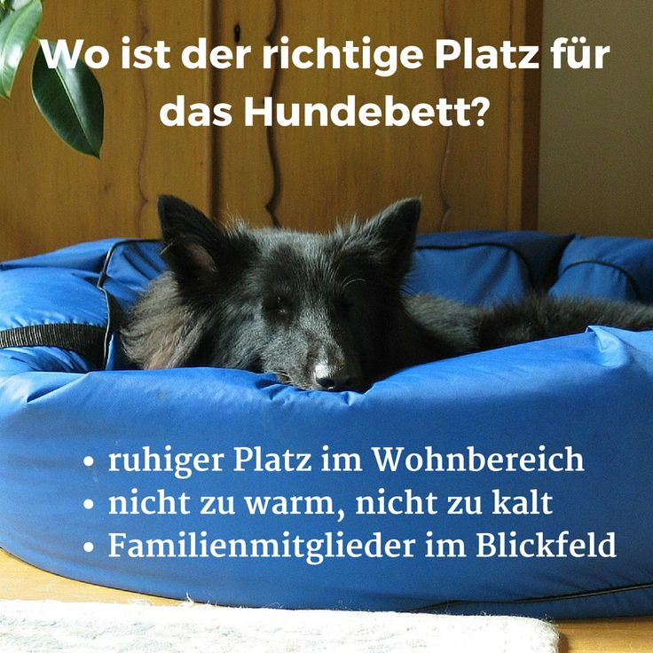 Wo ist der richtige Platz für das #Hundebett?