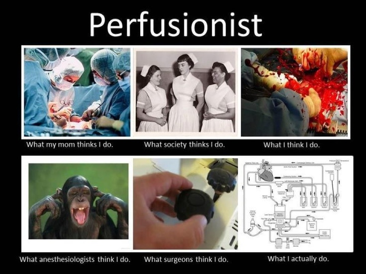 17 Best Perfusionist Images On Pinterest Medicine Nursing And Med