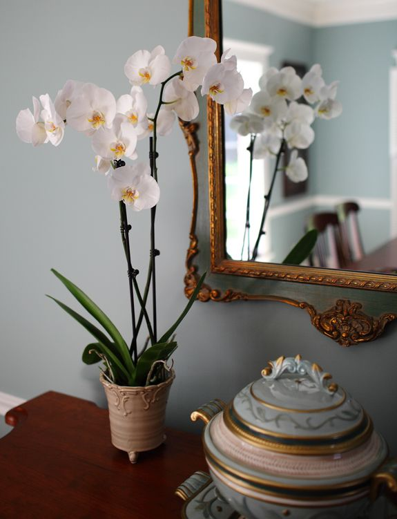 White Orchid in Blue Dining Room