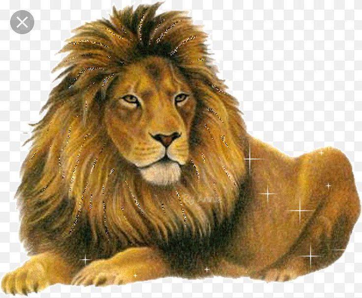Любви, анимашка картинка лев