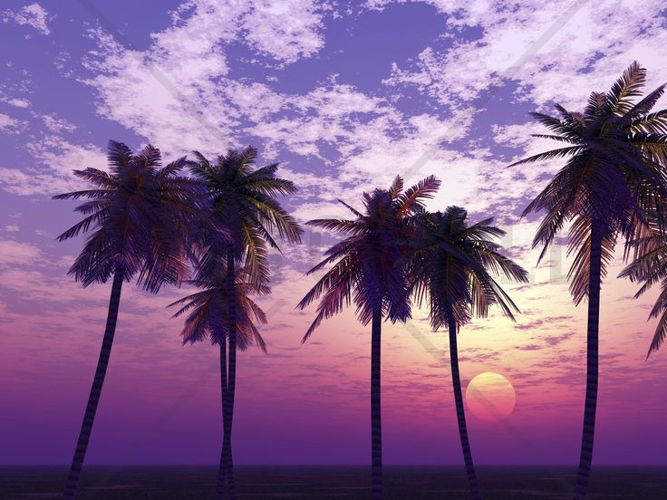 Beautiful Sunset - Wall Mural & Photo Wallpaper - Photowall