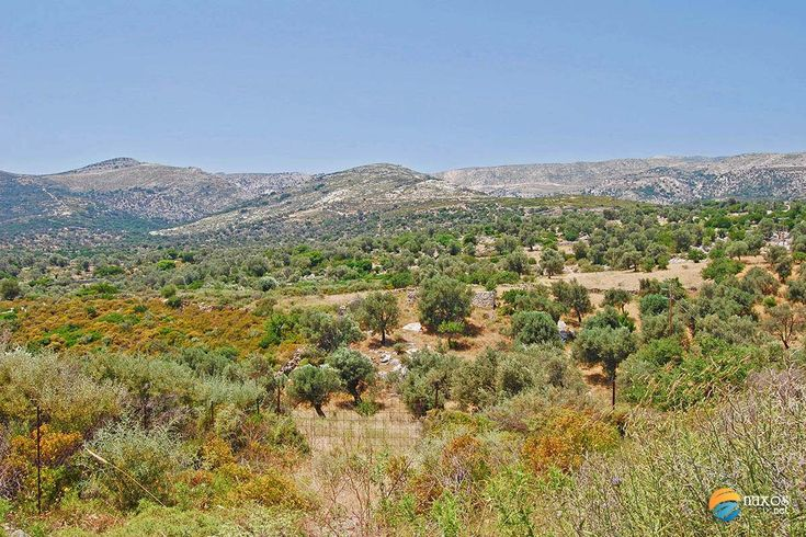 A drive through the countryside of Naxos actually reveals a very respectable farmland production base. The Tragea area is more of a ...