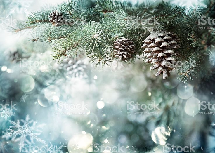 Fir Branch With Pine Cone And Snow Flakes royalty-free stock photo