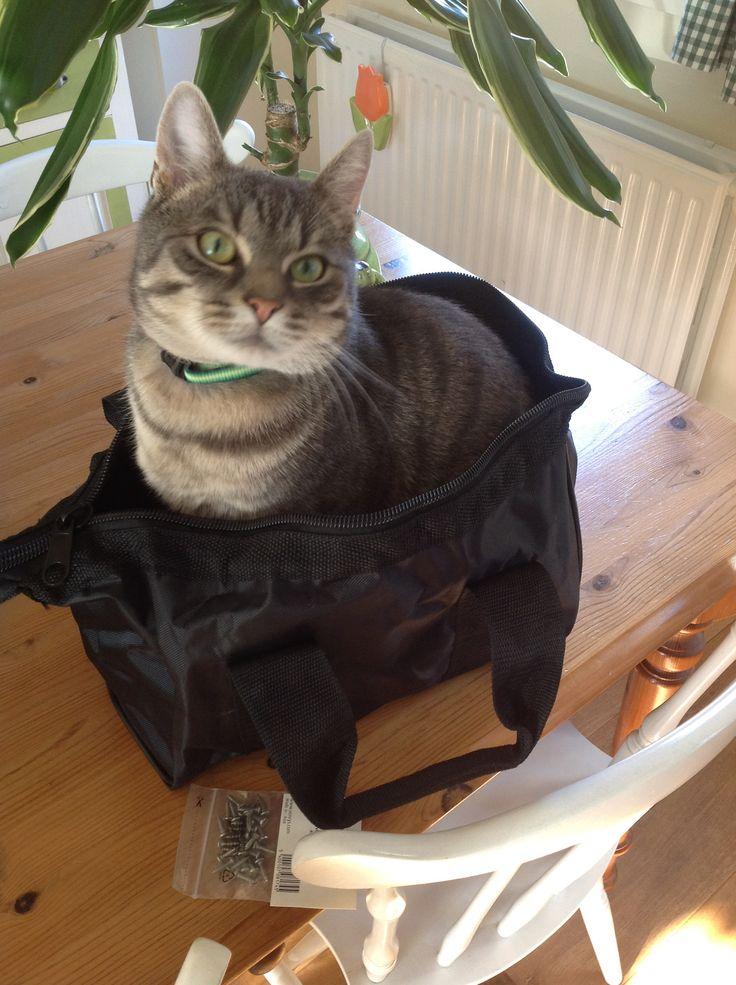Ollie in de tas, mijn gekke kat