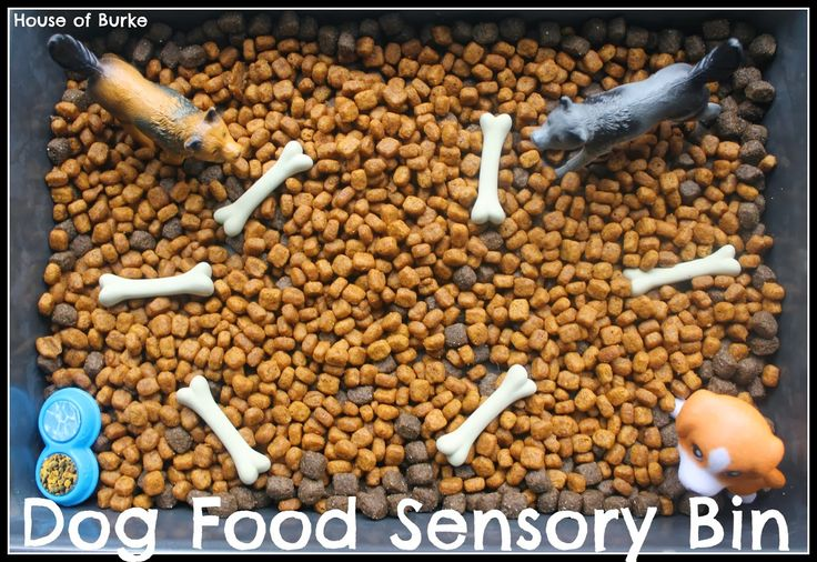 Dog Food Sensory Bin - is it for your dog to have teachable moments or to encourage your kid to play with dog food, some days the internet is so confusing