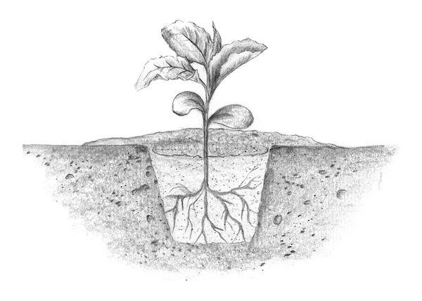 Anbau von Gemüse u. Salat – Spriessbürger