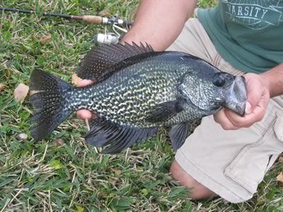 Crappie Fishing Tips (How to catch Crappie)