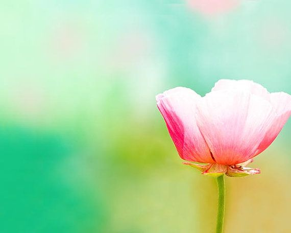 botanical photography nature poppy photography fine art 8x10 8x12 floral pink pastel flower teal art print mint yellow bedroom decor on Etsy, 19,35€