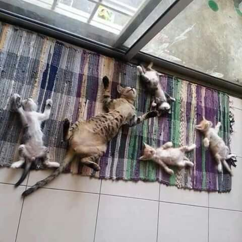 Crashed Out Cat & Kittens~ TOO CUTE!                                                                                                                                                                                 More