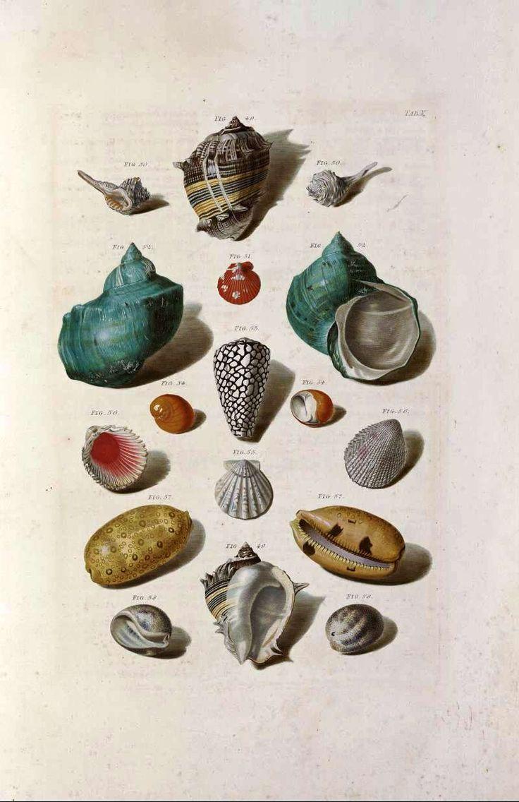 Finding Fabulous: Vintage Printable Sea Shell Prints!