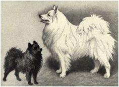 Kleinspitz + Großspitz 1909, Heinrich Sperling  ,,Nordisk Familjebok,, 2.Auflage Til art.Hunden III.