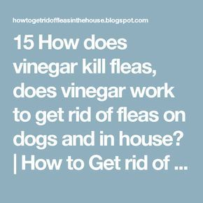 15 How does vinegar kill fleas, does vinegar work to get rid of fleas on dogs and in house? | How to Get rid of Fleas in the House and outside completely naturally