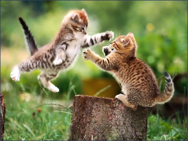 Cat fight amazing funny hd wallpaper   HD Wallpapers Rocks