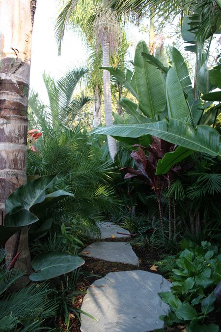 Tropical garden next to a stream - i like the rocks but I am only thinking Snakes and Spiders....
