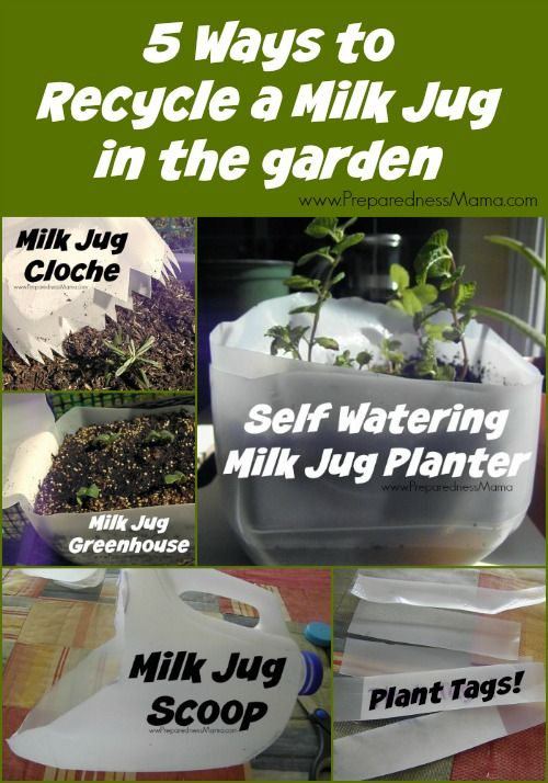 5 Ways to Recycle a Milk Jug in the Garden