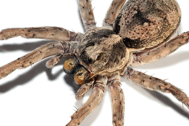 Home remedies to keep spiders out of the house wolf