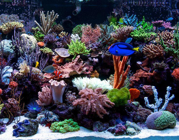 AquariumDomain.com. Marine AquariumSaltwater ...
