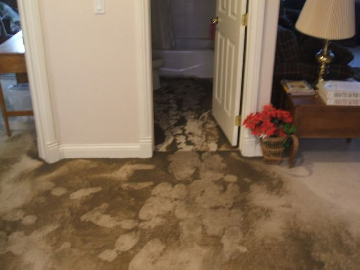 17 best images about sewage damage on pinterest home for Sewage backing up into house