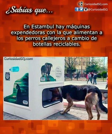 ¿Sabías que? en Estambul hay maquinas expendedoras con las que alimentan a los perros callejeros a cambio de botellas reciclables.