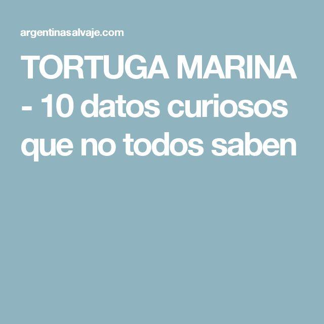 TORTUGA MARINA - 10 datos curiosos que no todos saben