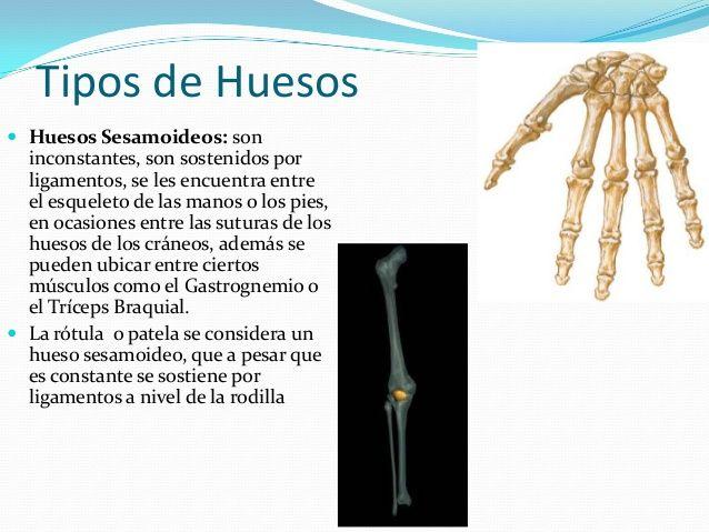Generalidades De Anatomia Dermis Epidermis Vascular