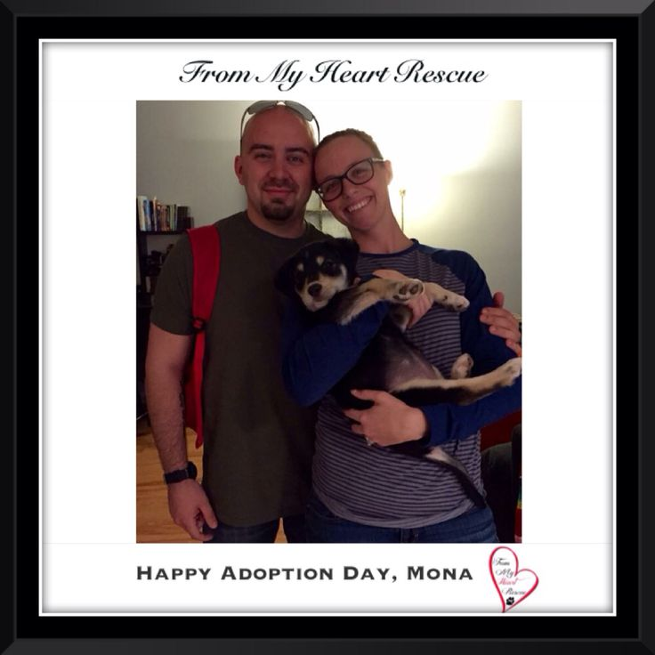 #Please ❤️+ #Pin #FromMyHeartRescue #RescueWithoutBorders #SavingOneDogAtaTime ~ #Happy #Adoption #Monica #aka #Mona *Many thanks to Linda, Maggie, Christa & Km's family for all their hard work behind the scenes. *Thank you❤️ *Info, Foster, Adoption, PayPal & e-transfer: frommyheartrescue@hotmail.com *Our Vets: Brock St. Animal Hospital/FMHR 905-430-2644 *Fundraising & Volunteering: FMHRfundraising@hotmail.com    *www.frommyheartrescue.com  *Find Us: Petfinder, FB, Twitter, Instagram…