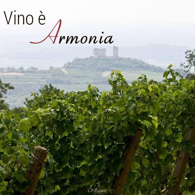#ParoleDiVino: il vino è atmosfera, il vino è allegria, il vino è armonia.