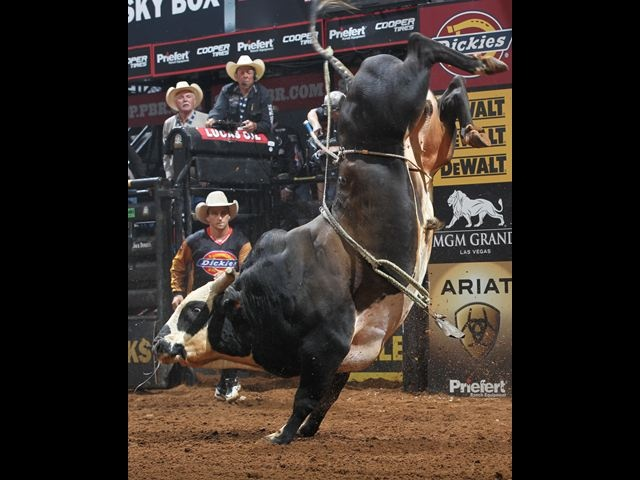 R.I.P. Rango ... he was jus' 7 when he passed away so  unexpectedly last Sept 15th (Stock Contractor Jeff Robinson; also had Chicken on a Chain who retired 2012) Good bull n if ya rode him ya were good for 90pts