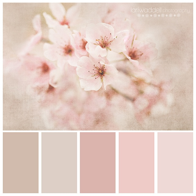 Beautiful Pins Everyone! I am going to switch up today. Here is the color palate; CHERRY BLOSSOM FANTASY DREAM WEDDING. Let's try to keep the theme and color consistent. Please try to pin without long descriptions, beautiful and soft. Thanks so much for being a part of this board. Blessings to you my sisters, Jade