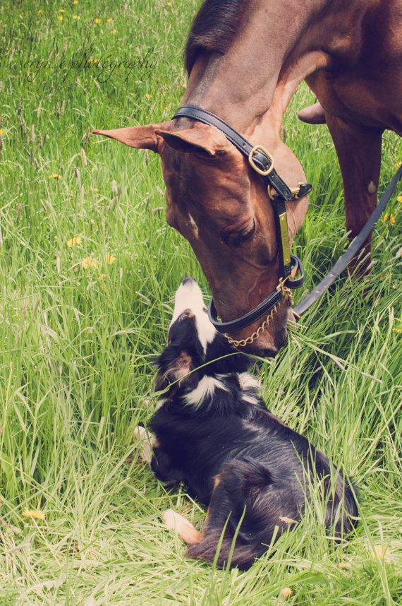 horse photography, dogs, best friends, horse and dog, best friends, dog photo, animal love, animals, home decor, wall art, animal lover