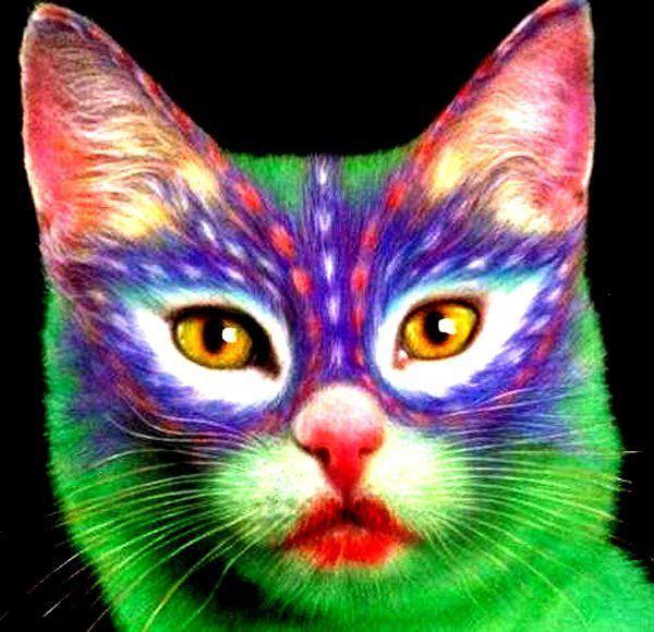 واحة المخطوطات و الطوابع و العملات 16a8fe0e0cba73cb05eb433a15f2064b--mardi-gras-kitty-cats