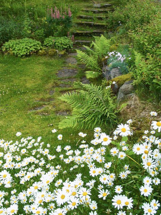 Några informella trappsteg av sten insmugna bland naturstenar, gräs, mossa och perenner ger en lantlig gammaldags charm. Bilden är från stiftsgården Tallnäs utanför Skillingaryd i Småland.