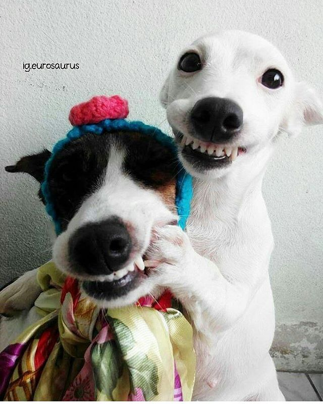 Haha  | Photo by @eurosaurus #cubanimals
