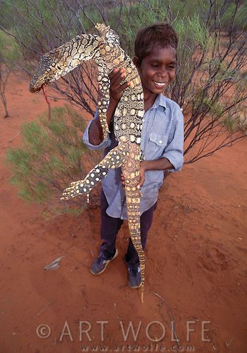 The goanna has an important place in Australian aboriginal culture. Not only is…