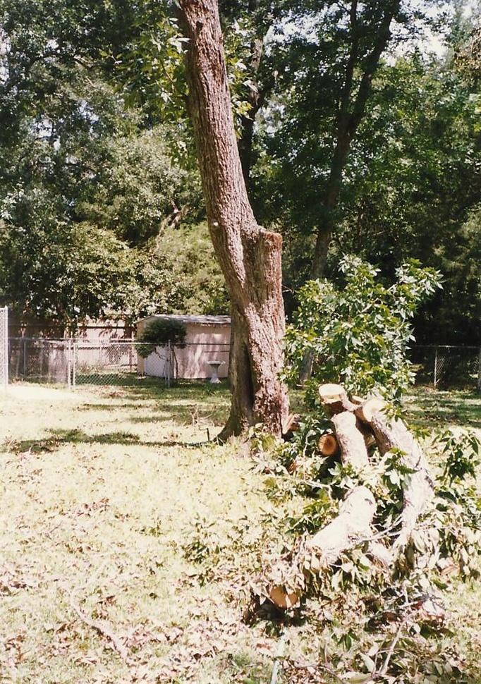 Hurricane Opal aftermath