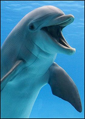 "Dolphin... ""Hey fella, you're looking chirpy today!"""