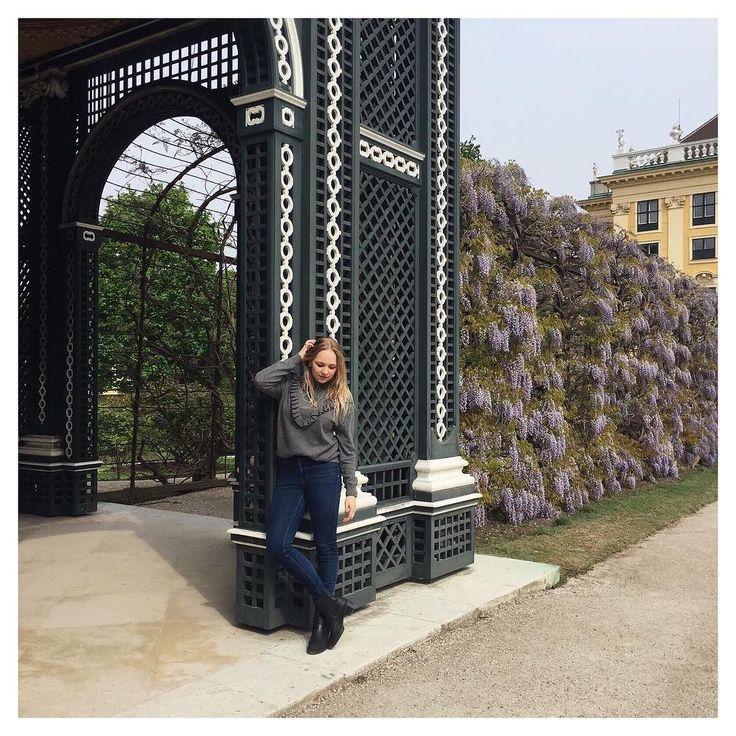 17 beste idee n over blauweregen op pinterest bloemwingerd klimmende bloeiende wijnstokken - Wijnstokken pergola ...