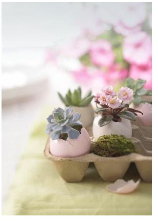 egg vessels with succulents and miniature african violets. In ceramic egg tray instead, or nestled in moss lined terra pots