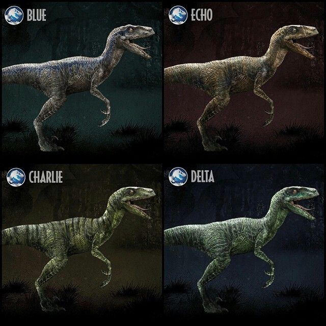 Jurassic World- Meet the Raptor Squad: Raptor Blue- In the late Cretaceous Period, the Velociraptor excelled at hunting with its keen senses, large brain, and the retractable sickle claw on each foot – and no creature in Jurassic World demonstrates this better than Blue, the leader and oldest member of the raptor pack. Larger, smarter and more cunning than the rest, she insists on eating first…which is why Own feeds her last so she remembers he's in charge. DNA from a Black-Throated African…