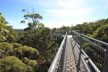 Valley of the Giants Treetop Walk Walpole Wilderness Discovery Centre Denmark, Western Australia